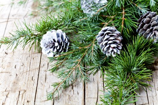 Evergreen fir tree branch and white pine conesю