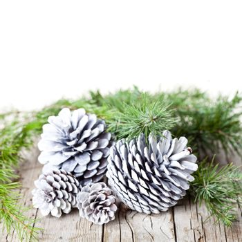 Evergreen fir tree branch and white pine cones.