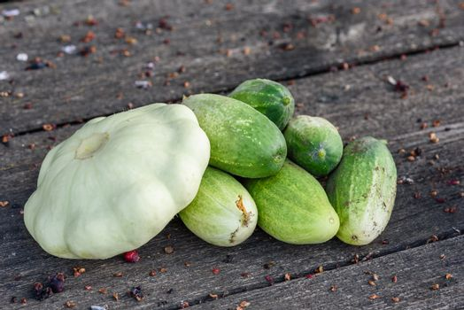 Pattypan squash and few cucumbers harvested from the vegetable garden beds