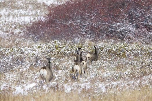 Deer in Winter