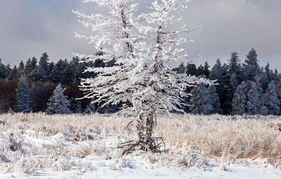 Cypress Hills First Snowfall