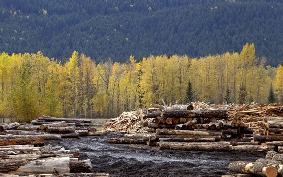 Golden British Columbia