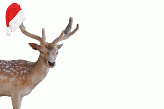 merry christmas a cute deer with big antlers with a santa claus hat hanging on them isolated on a white background