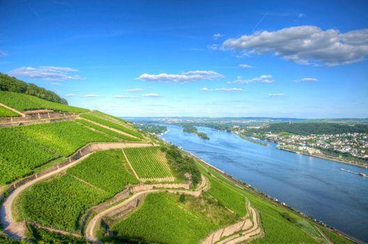 Vineyard landscape with rhine river, Ruedesheim, Hessen, Germany