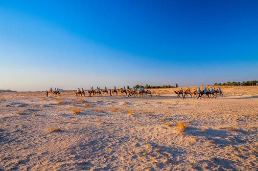 Camels caravan going in sahara desert, Tunisia, Africa