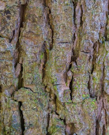 macro closeup of a tree trunk with big bark natural forest pattern background