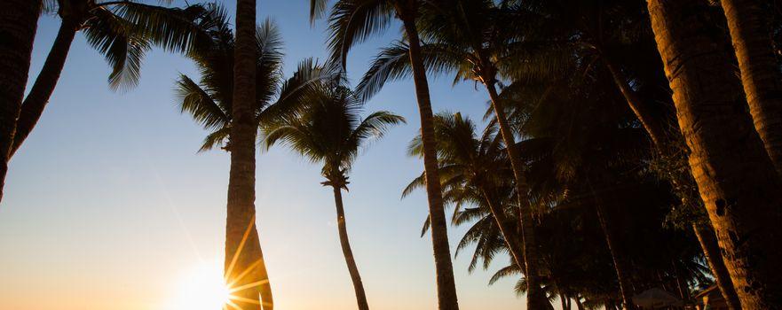 Sun shining through palm trees