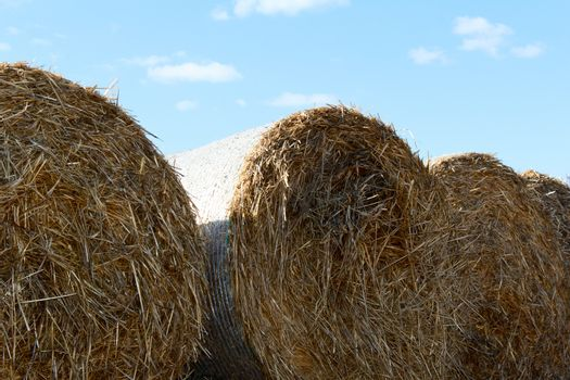 bales on hay after harvest. autumn. photo
