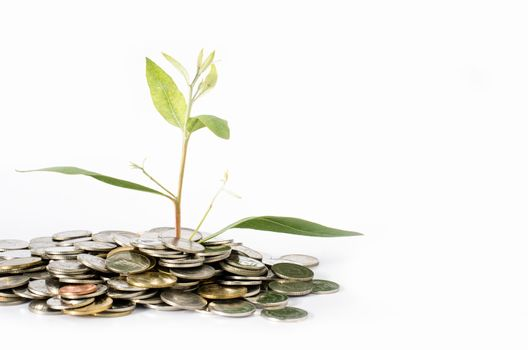 Trees grow from USD concept of business growth as the growth of