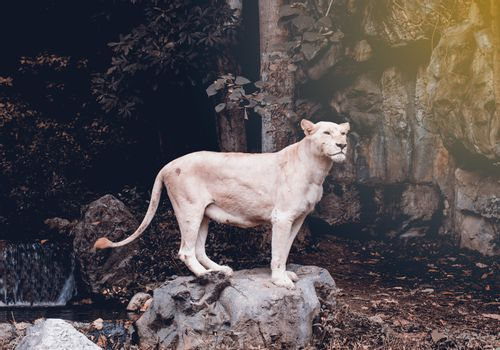 White Lion hitters standing posture