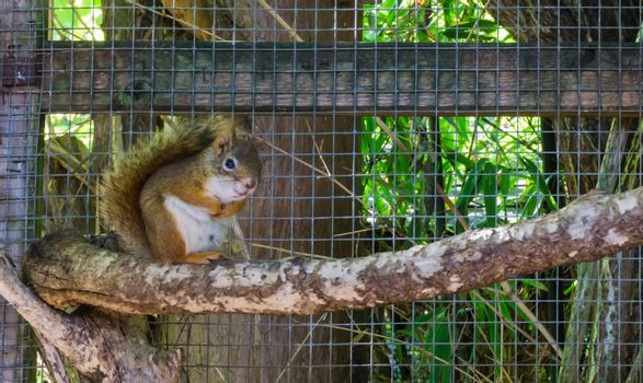 Cute adorable brown red common squirrel sitting on a branch rodent animal pet
