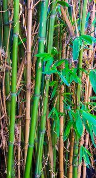 macro closeup of green and yellow bamboo japanese natural background texture