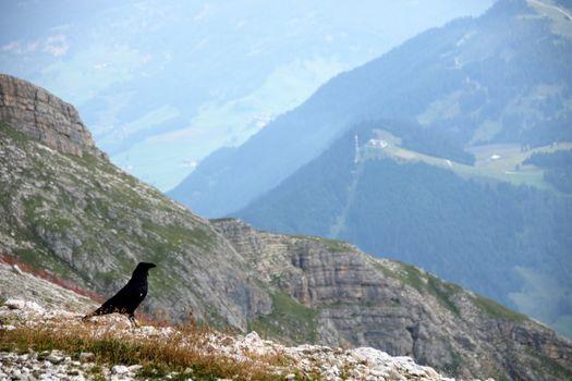 Dolomite's landscape and alpine raven