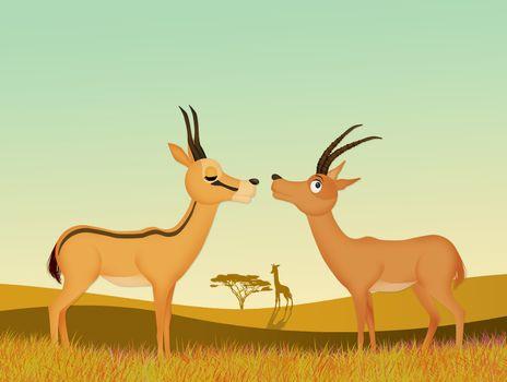 gazelles in the wild