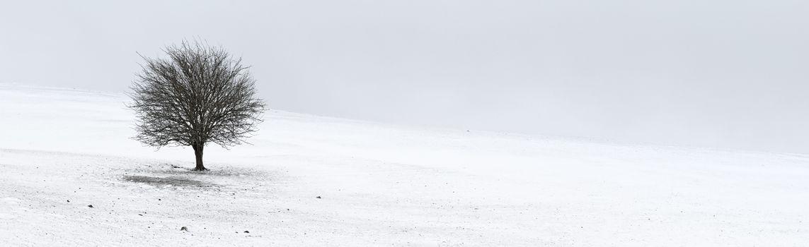 Winter Loneliness - One tree panorama