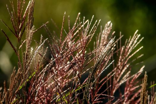 Closeup of grass. Grass on the background of river. Nature grass near the river in Latvia. Abstract background of grass and river. Wild grass in autumn, Latvia.
