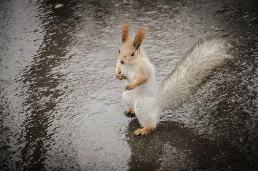 Squirrel welcomes rainy weather