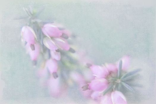 Small pink florets on a green indistinct background with the imp