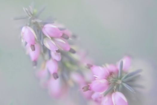 Small pink florets on a green indistinct background