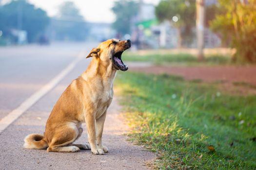Dog sitting mouth