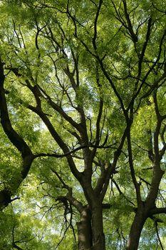 Sfondo rami verdi, green branches background