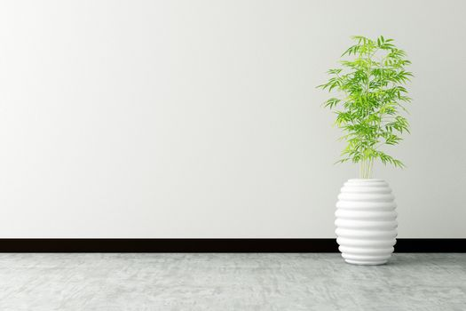 tree pot and white wall interior decorated