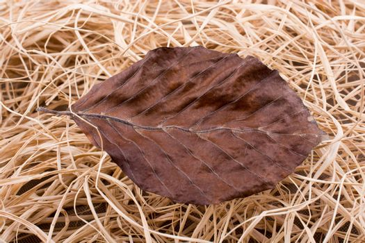 Beautiful dry autumn leaf placed on a straw background