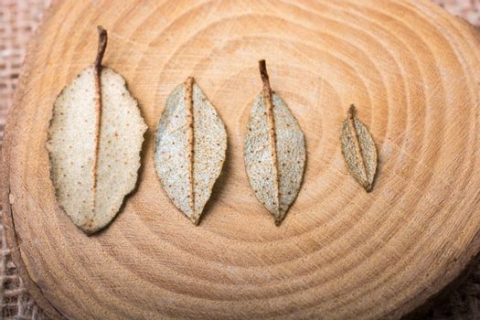 Dry green leaves on a a piece of wood on canvas