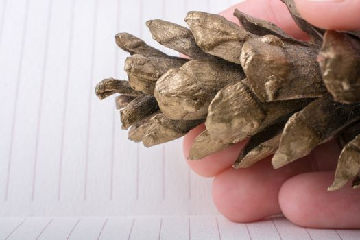 Pine cone on a lined peper background
