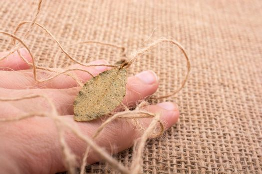 Dry green leaf on held in hand