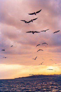 Seagulls flying in sky  in Istanbul of Turkey