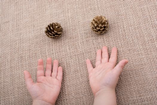 Pine cones beisde toddlers hands on a canvas background