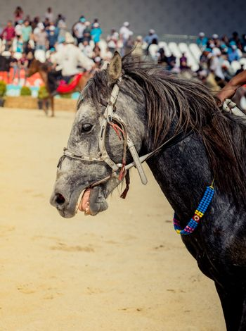 Horse head with long mane and partial harness