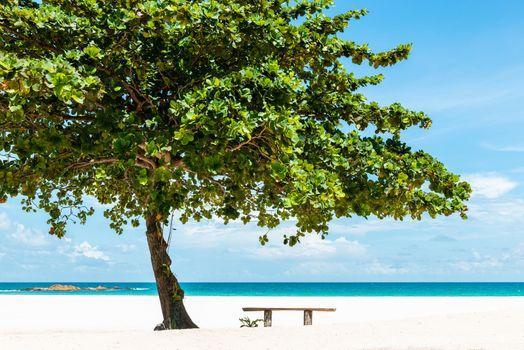 Bench under a tree on a beautiful white sand tropical beach in Bintan Island, Indonesia