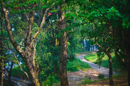 Pathway in green forest. Dirt Road Creepy Marsh Oak Trees. Dreamy landscape with foggy trees, mountain pathways, colorful leaves. Travel. Nature seasonal background. Natural environment.