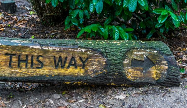 direction sign creatively carved into a tree trunk, Forest or garden signpost, board This way