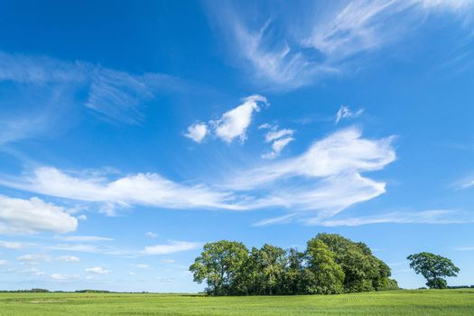 Group of trees on a green field in the summer under a bright blue sky with fantasy clouds