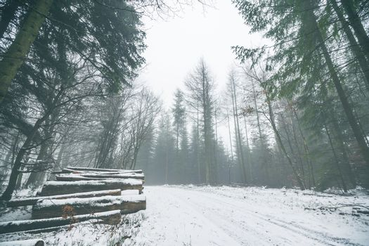 Woodpile in a misty forest with snow