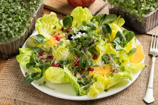 Vegetable salad with freshly grown micro greens