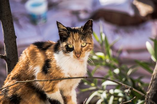 pictures of the Lovely cat as domestic animal in view