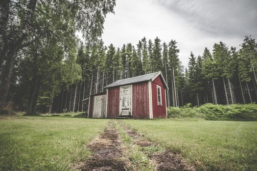 Red cabin in a swedish forest with pine trees