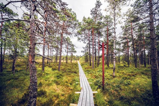 Forest wilderness with a wooden trail made of planks