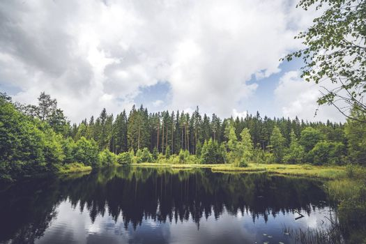 Calm lake wirh dark water in the middle of a forest with pine trees reflecting in the water