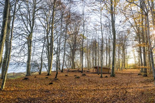 Forest scenery with a wooden shelter