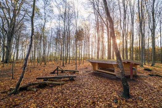 Shelter in a forest sunrise