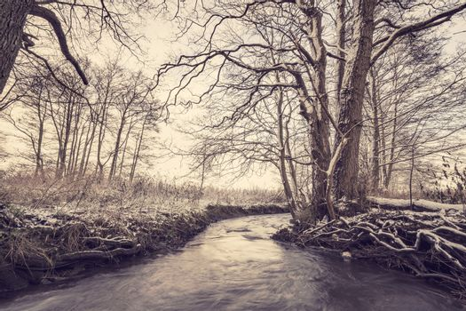 River running through a forest in the wintertime