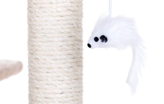 Cat toy on scratch post, isolated
