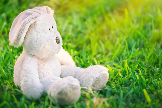 Cute little white Easter bunny sitting on fresh green grass field on spring sunny day, traditional Easter symbol, christian religious holiday