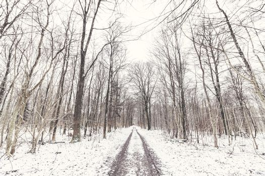 Forest covered in snow in the wintertime
