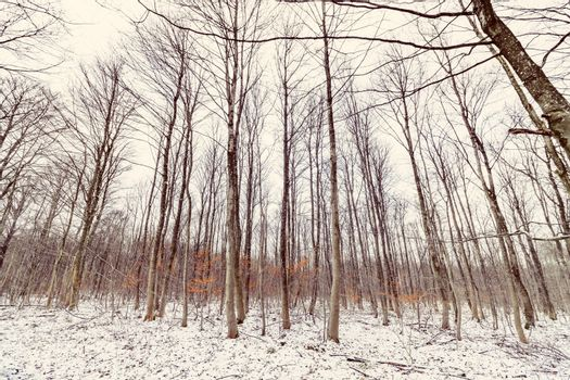 Wintertime scenery in a forest